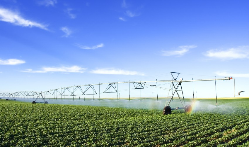 irrigating a potato field